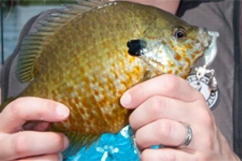 News & Tips: Pitching Weeds for Panfish
