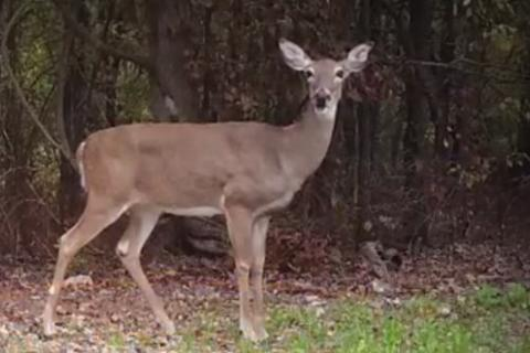 News & Tips: Help Your Deer Herd by Shooting More Does...