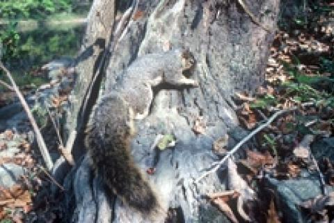 News & Tips: Change Up Your Squirrel Hunting – Take Them By Water...