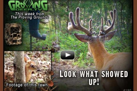 News & Tips: A Big New Buck Shows Up on Our Cameras...