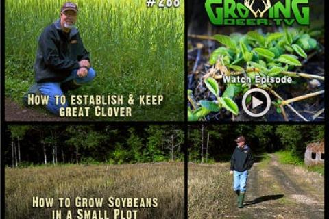 News & Tips: The Best Food Plot Strategies: Learning From Experience (video)...