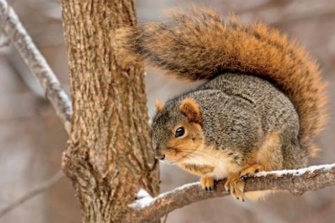 News & Tips: Solve Squirrel Frustrations with Sawmill Gravy (Hunting Tactics & Recipe)...