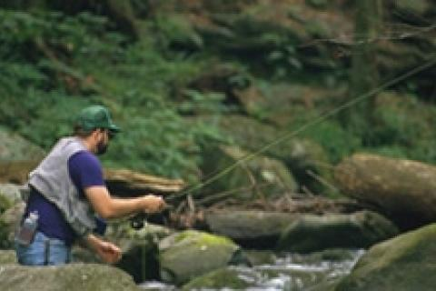 News & Tips: Discover the Joy of Small-Stream Trout...