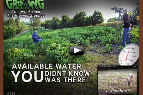 News & Tips: Food Plot Tips for Hot Temperatures