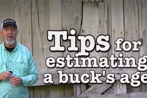 News & Tips: 10 Tips to Quickly Age Bucks Plus Food Plot and Habitat Help  (video)...