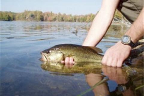 News & Tips: A Delicate Subject: The Art of Catch and Release...