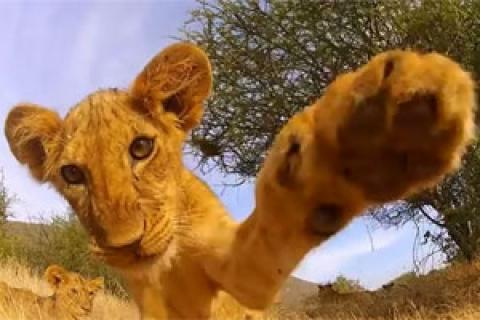 News & Tips: 5 Great Animal Videos Captured by a GoPro Camera...