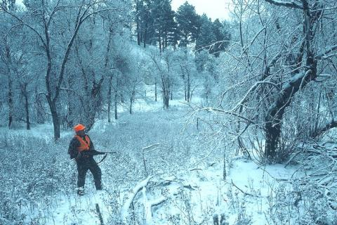 News & Tips: Snowy Weather Can be Great for Deer Hunting...
