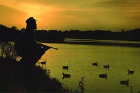 News & Tips: 8 Types of Confidence Decoys for Duck Hunting...