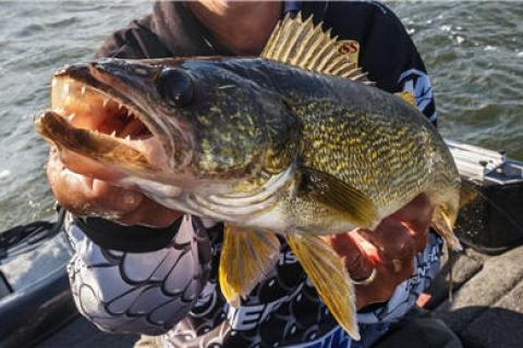 News & Tips: Learn Why You Should Spread Out Lure Presentations for More Walleye...