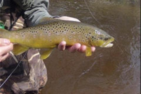 News & Tips: Fishing Tip: Hunting for Trout Hideouts...