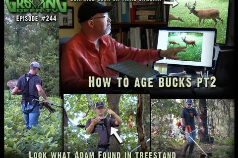 News & Tips: Big, Old Buck: Shoot or Don't Shoot?