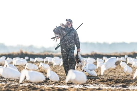 News & Tips: Snow Goose Hunting 101
