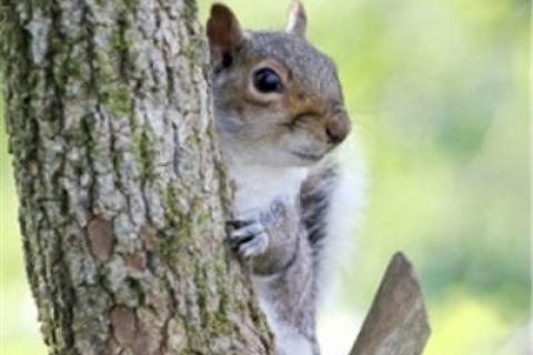 News & Tips: Explore More Wildlife & Nature with Kids: Learn About Squirrels (video)...