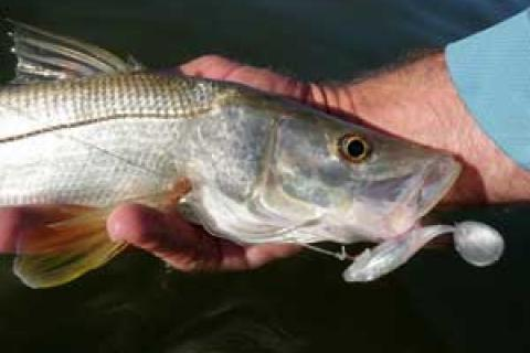News & Tips: Key Factors to Sight Fishing Snook From the Beach...