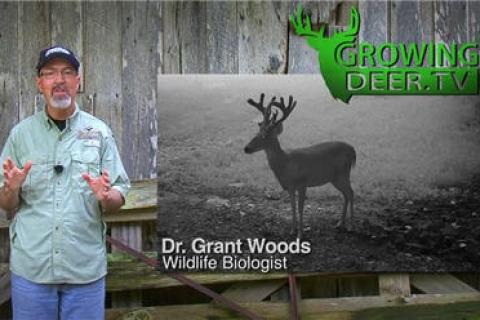 News & Tips: Whitetailed Deer: Watching and Comparing Velvet Bucks (video)...