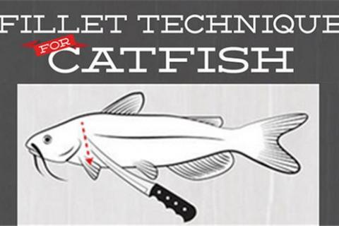 News & Tips: Catfish Fillets: 5 Simple How To Steps (infographic)...