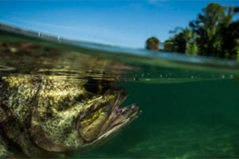 News & Tips: How to Increase Your Sight Fishing Success...