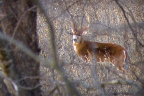 News & Tips: Deer Hunting Tactics Making Changes for the Season and Conditions  (video)...