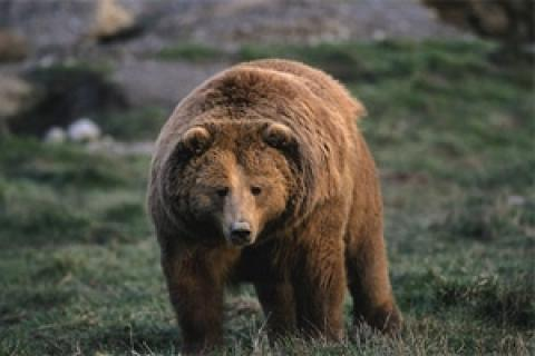 News & Tips: Hunting Safely in Bear Country