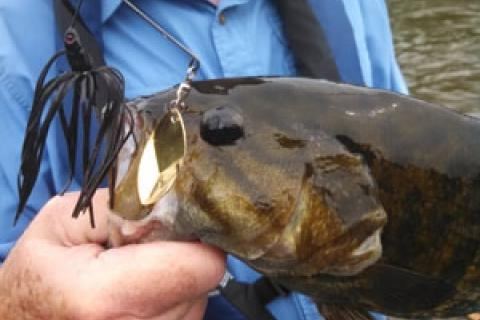 News & Tips: Spinnerbaits Get the Nod for Summertime Bass in Murky Rivers...