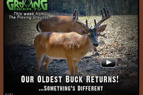 News & Tips: Our Oldest Buck Returns, a Prescribed Fire & Pond Tips...