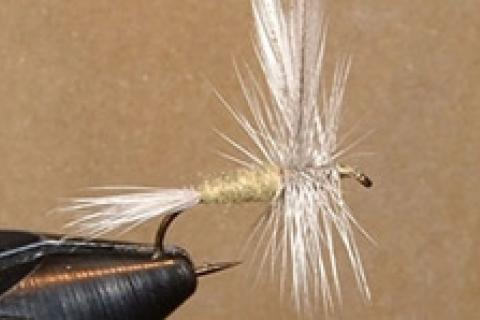 News & Tips: Tying the Blue-winged Olive