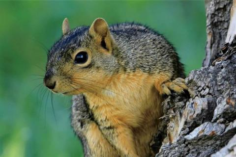 Squirrel photo by Denver Bryan,Images on the Wildside...