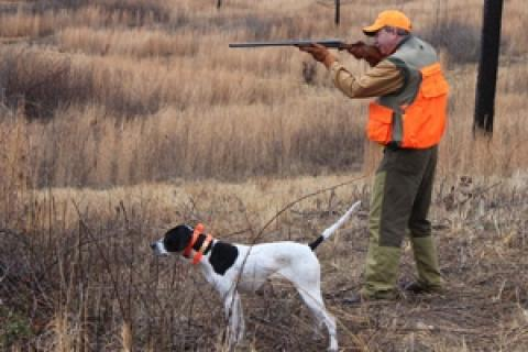 News & Tips: Georgia Quail Hunt at Spring Bank Plantation...