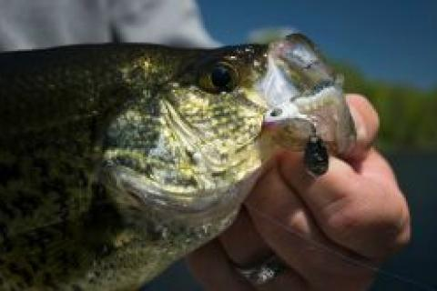 News & Tips: 3 Reasons to Fish Bladed Jigs for Fall Crappie...