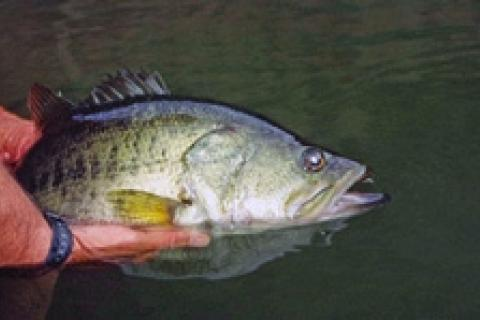 News & Tips: REMOVED - Headwaters for Prespawn Bass...
