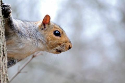 News & Tips: Cure Winter Boredom With a Squirrel Still-Hunt...