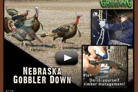 News & Tips: Taking a Nice Gobbler - Bow Hunting