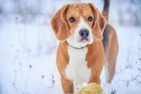 News & Tips: Hypothermia in Dogs: Recognizing the Signs and Taking Action...