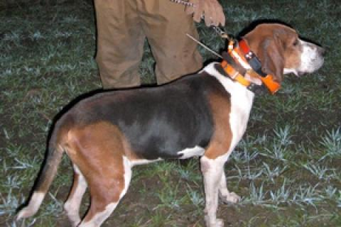 News & Tips: Grand American Celebrates Coon Hunting...