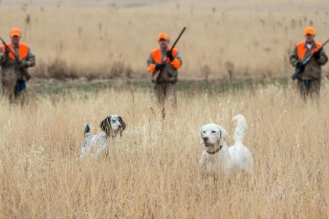 News & Tips: Keep Your Hunting Dog Healthy in the Field...