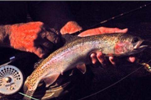 News & Tips: Fishing Missouri's Wild Trout Streams