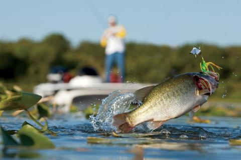News & Tips: Andy Montgomery's When & Where Best Bass Buzzbait Tricks...