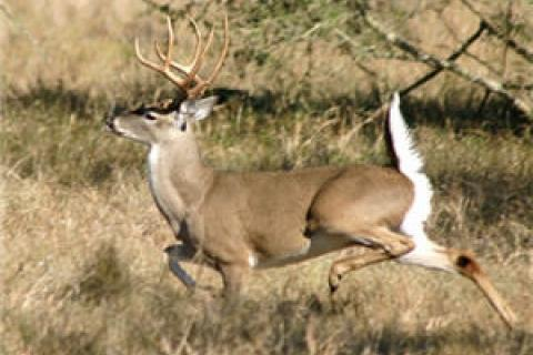 News & Tips: Windy Day? Tips to Make Sure It Doesn't Screw Up Your Deer Hunt...