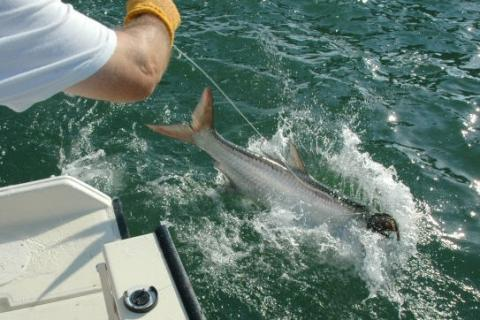 News & Tips: Tips for Your First Florida Tarpon