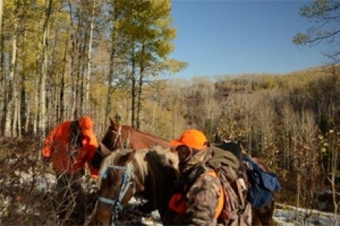 News & Tips: Preparing Horses for an Elk Hunt