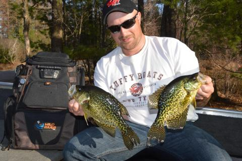Keith Worrall Holds a Brace of Northern Wisconsin Crappies by Keith Worrall Holds a Brace of Northern Wisconsin Crappies...