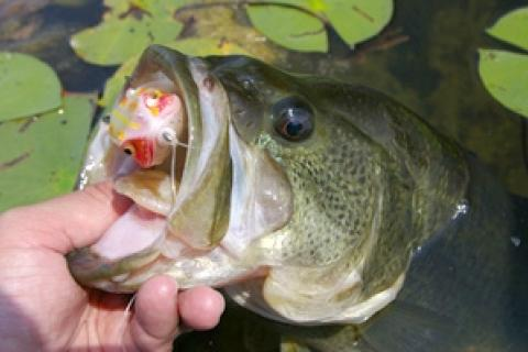 News & Tips: The Importance of Weeds and How You Should Fish Them...