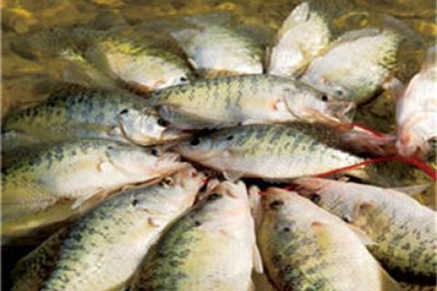 News & Tips: Crappie Fishing Tips From Bill Dance