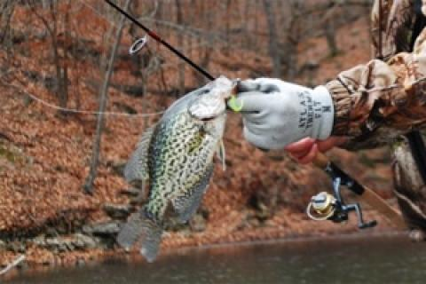 News & Tips: Cold Weather Tactics for Lake of the Ozarks Crappie...