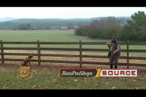 "1Source Video: Gundog Training: Teaching the ""Here"" Command"
