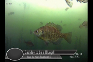 1Source Video: Bad Day To Be a Bluegill