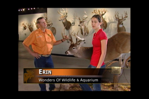 1Source Video: Fun Facts About Deer Antlers
