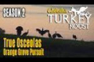 1Source Video: Hunting Osceola's: Cabela's Turkey Roost