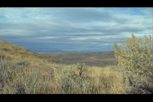 1Source Video: Oregon Quail Hunt with Allen Treadwell